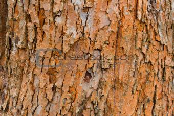 grunge bark texture