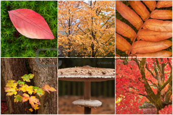 Beautiful compilation of Autumn Fall nature images landscape