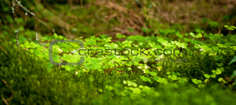 Beautiful lush green nature background