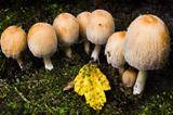 Small group of mushrooms in autumn