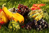 Pumpkins and grapes  in the grass
