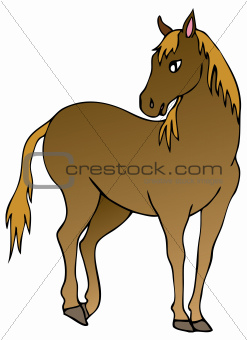 Brown horse on white background