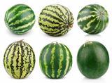 Set of watermelon fruits