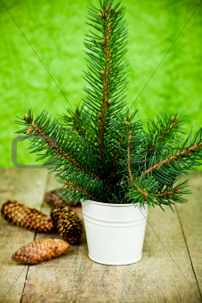 christmas fir tree and pinecones