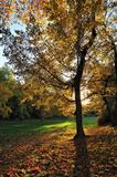 Autumn Light in Park