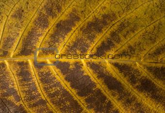 Autumn leaf structure