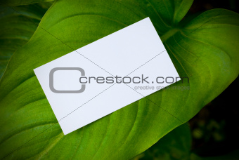 green leaf and blank card