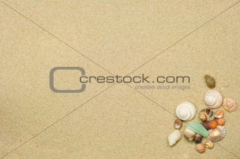 shells over sand background