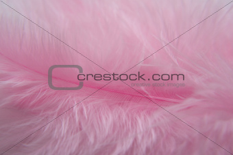 Rose Bird  feathers