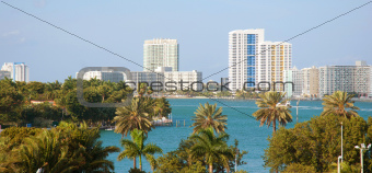 Palm trees and the Miami skyline daytime