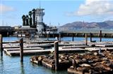 This is PIER 39 and the sea lions