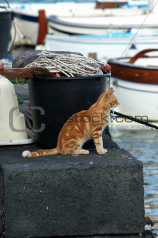 Sea cat waiting