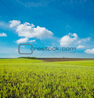 agricultural green field