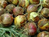 onions bulbs