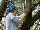 tree pruning