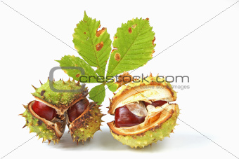 Horse chestnuts (Aesculus hippocastanum)