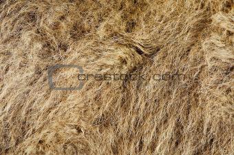 Camel's Hair