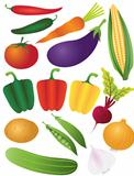 Vegetables Illustration Isolated on White Background