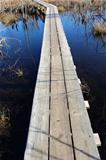Long wood wharf over water