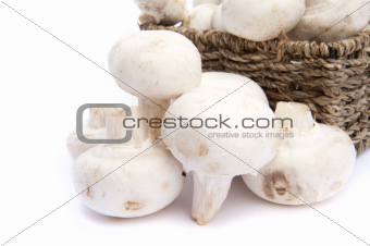 Fresh champignon mushrooms in rustic basket isolated on white