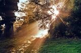 Inspirational dawn sun burst through trees in forest Autumn Fall