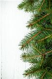 christmas fir tree