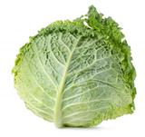 Savoy cabbage isolated