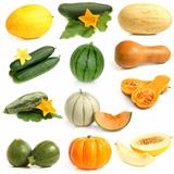 Vegetable and fruits collection (Cucurbitales)