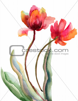 Beautiful red flowers, watercolor illustration