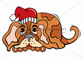 Dog in Christmas time