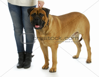 woman with big dog