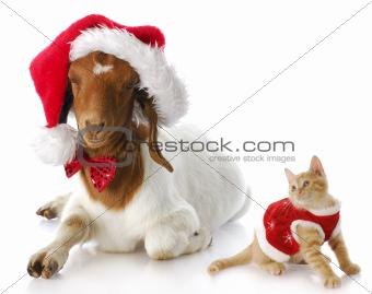 christmas kitten and santa goat