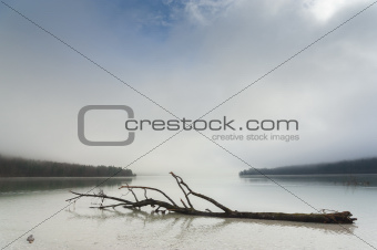 Dead tree on lake surface