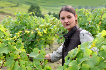 Young woman tending grapevines