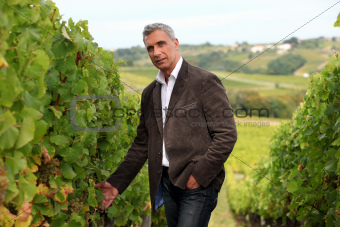 Winegrower in the vineyard