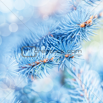 Frozen fir tree background
