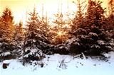 Winter sun trough the trees