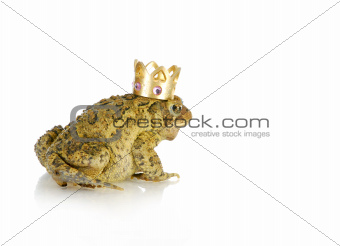 toad prince