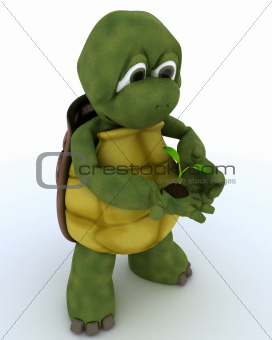 tortoise nurturing a  seedling plant