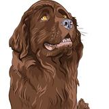 vector sketch dog Newfoundland hound breed sitting
