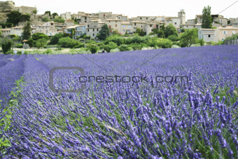 lavender fields hill town provence france