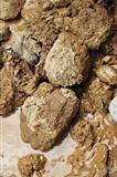 Muddy Rocks