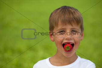 Little boy eats a strawberry