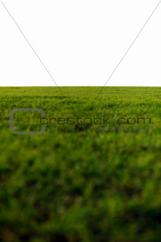 green field