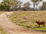 Australian rural country road scene