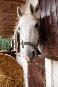 Horse looking out of the stable window
