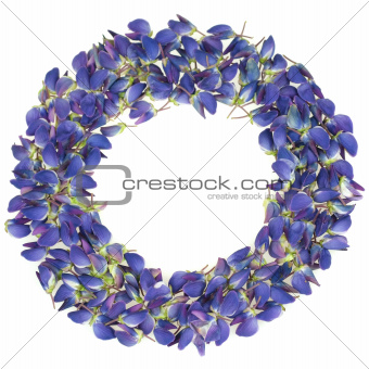 Frame made of beautiful lupine flower petals