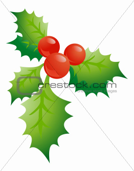 Holly sprig on white background vector illustration