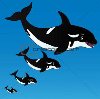 Orcas in the ocean