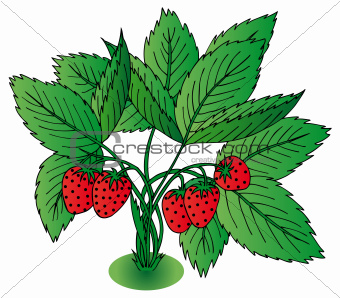 Red strawberry with leaves
